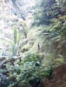 lushness in Ubud