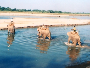 elephants crossing, Chitwan National Park, Nepal