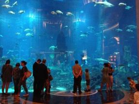11 million gallon acquarium