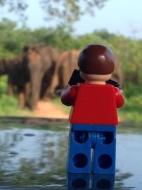 going on safari, Udawalawe National Park, Sri Lanka
