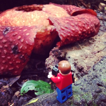 metting a rare Rafflesia on the florets floor