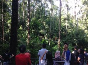 no orangutans at Semenggoh