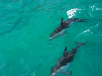 dusky dolphins up close and personal
