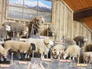 so many sheep