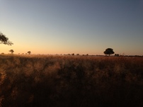 gorgeous morning light